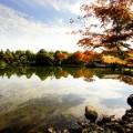 Tokyo fall leaves Showa Kinen2