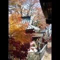 Tokyo fall leaves Chichibu Tama Kai National Park