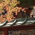 Tokyo fall leaves Mt Takao