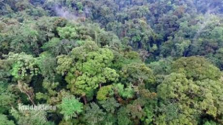 spc inside africa rwanda nyungwe a_00061301