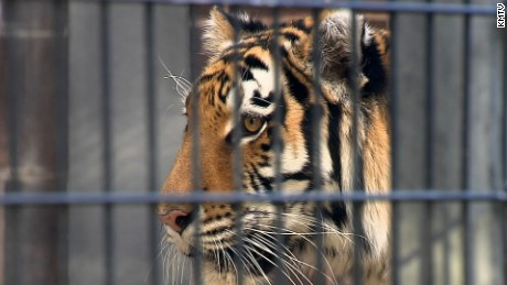 NE: WOMAN BITTEN BY TIGER AT OMAHA ZOO   A tiger bit a woman at the Henry Doorly Zoo Sunday morning.