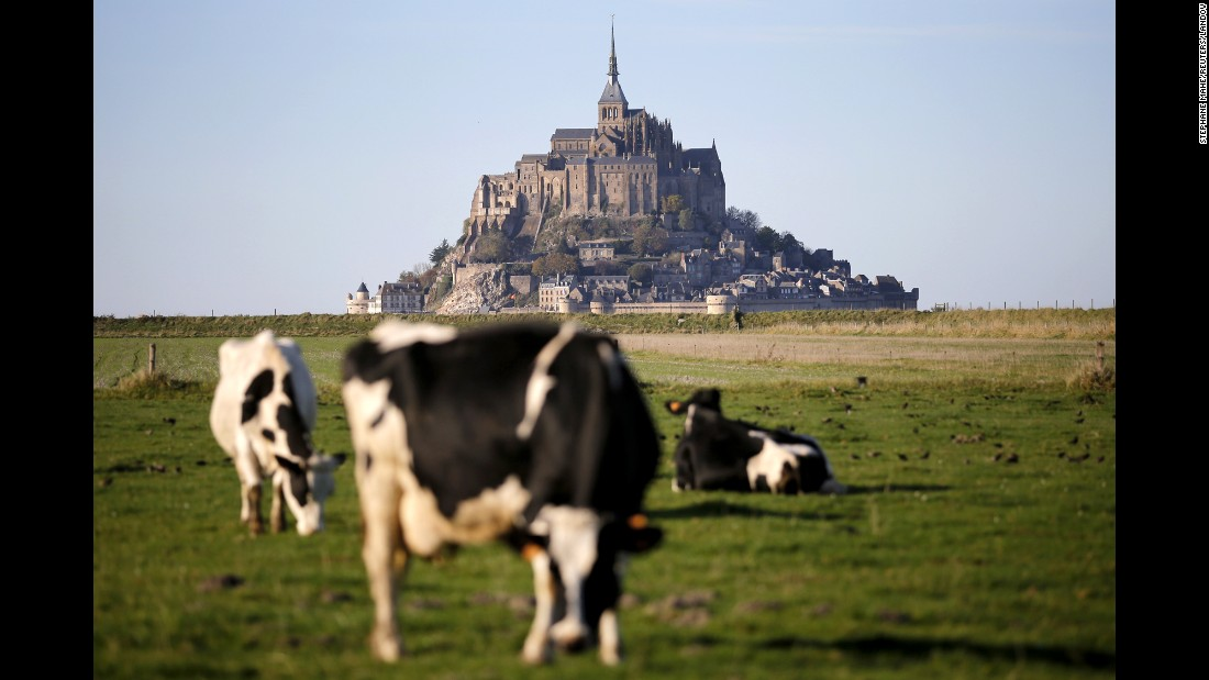 "Cows graze near the Mont Saint-Michel Abbey, a medieval monastery on an island just off the northwest coast of Normandy. A rare ""supertide"" in March completely swamped a new $227 million bridge connecting the island to the mainland."