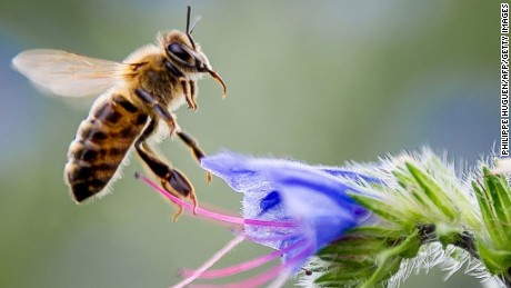 Scientists warn that declining populations of pollinators will affect future food supply.