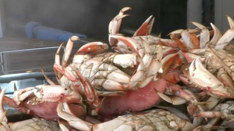 toxic algae threatens crab season pkg _00010802