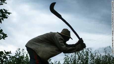 Former slave Francisco Rodrigues dos Santos demonstrates how he clears brush with his sickle on the piece of land which he lives and farms at the Nova Conquista settlement on April 8, 2015 in Monsenhor Gil, Piauí state, Brazil. He said he used the same type of tool when he was enslaved.