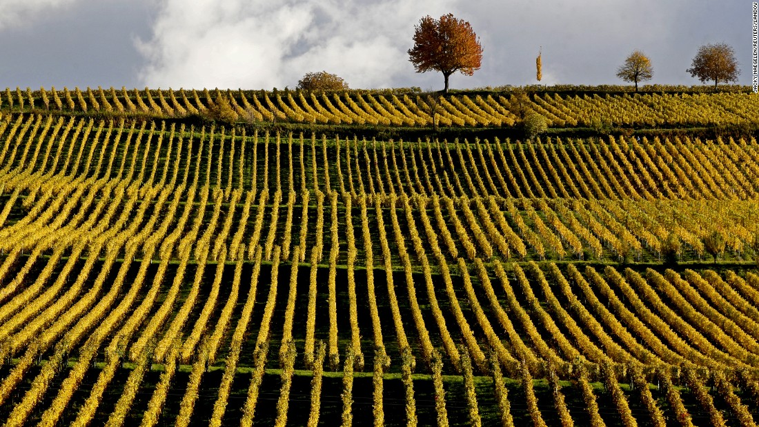 "Late autumn colors in the vineyards mark the change in season in Neuenburg. The <a href=""http://www.mygermancity.com/baden-wine-route"" target=""_blank"">Baden wine trail</a> covers 200 kilometers of wine-making country through the Baden side of Baden-Wurttemberg."