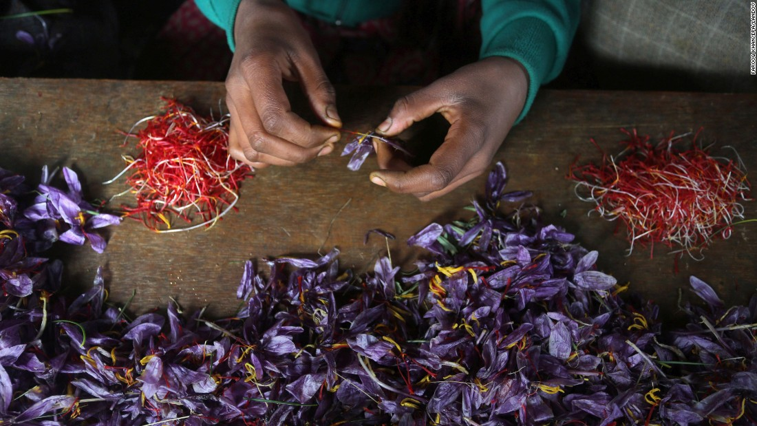 A Kashmiri farmer picks saffron from flowers in Pampore, in Indian-administered Kashmir. Pampore is famous for its high-quality saffron and Kashmir is one of the few places where the world's most expensive spice is grown.