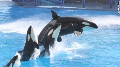 SeaWorld ending orca breeding program
