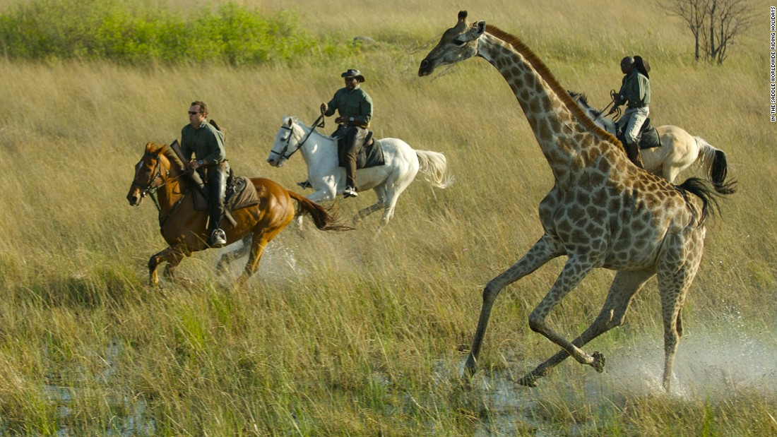 Galloping through the Okavango Delta in northern Botswana offers experienced riders the chance to get up close to nature's most extraordinary wild animals.