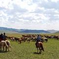 Mongolia - 20150726_152421