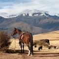 Peru - IMG_2159 copy