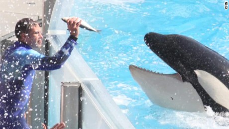 SeaWorld nixes killer whale shows based on 'feedback'