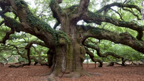 Anthony Bourdain: Parts Unknown - 312 - Charleston, SC