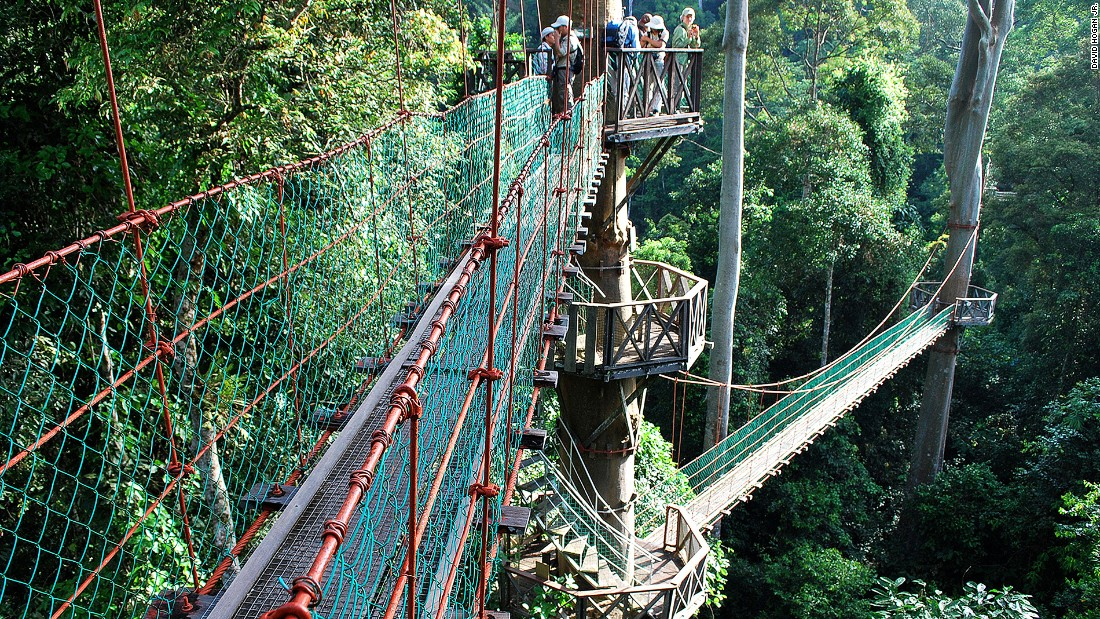 One of the highlights at Borneo Rainforest Lodge is its canopy walk. The entire resort and its walkways are elevated above ground on wooden stilts to preserve the rainforest floors.