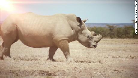 Inside Africa - Kenya Rhinos_00000329