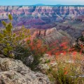 06 grand canyon cape final vegetation