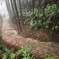 tanabe Kumano-Kodo-pilgrimage-route