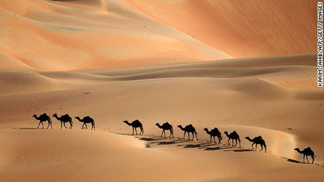 Abu Dhabi: Not banthas -- just camels.
