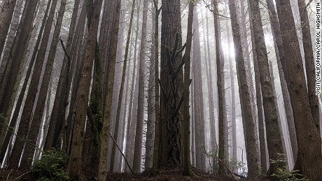 "The woods of ""Endor:"" Look out for Ewoks."
