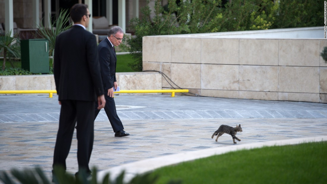 A man chases away a small cat at the G20 summit in Antalya, Turkey, on Sunday, November 15.