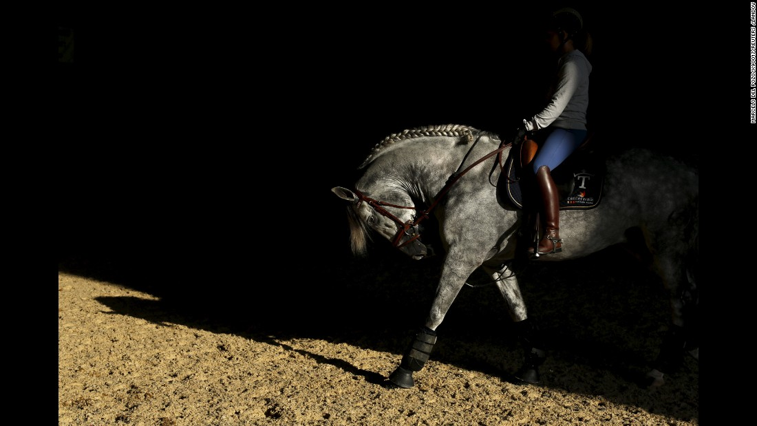 In the Andalusian capital of Seville, in southern Spain, the Sicab International Pre Horse Fair is dedicated exclusively to the purebred Spanish horse.
