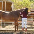 shelly may horse caress