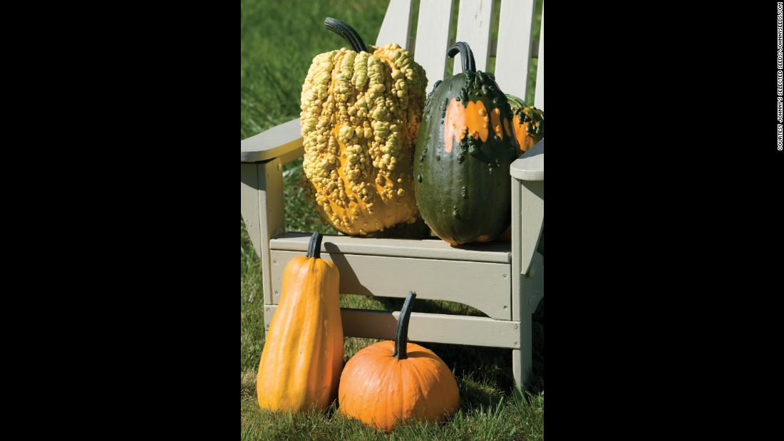 Lunch Lady gourds grow from 5 to 20 pounds and have hard skins covered in warts. They come in a variety of colors. Despite the name, they are not for your menu, they are decorative.