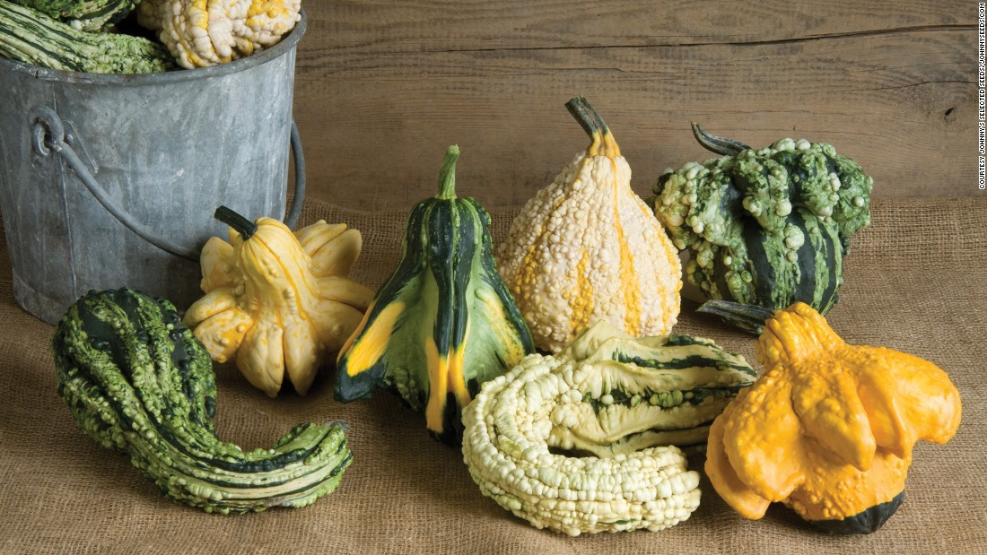Gremlin gourds come in a variety of bright colors, some are speckled, some striped, and range in a variety of shapes for your decorations.