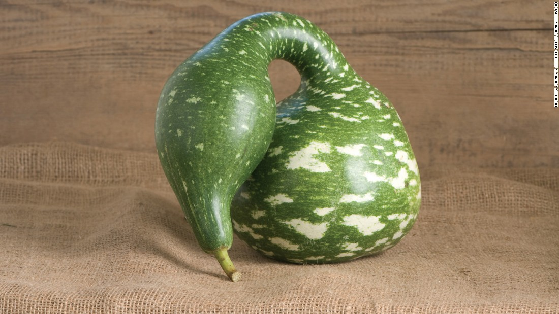 The green gourd with a long neck and light colored spots makes for a nice decoration. This Speckled Swan gourd is from the lagenaria family. It's early ancestors were used for carrying water.