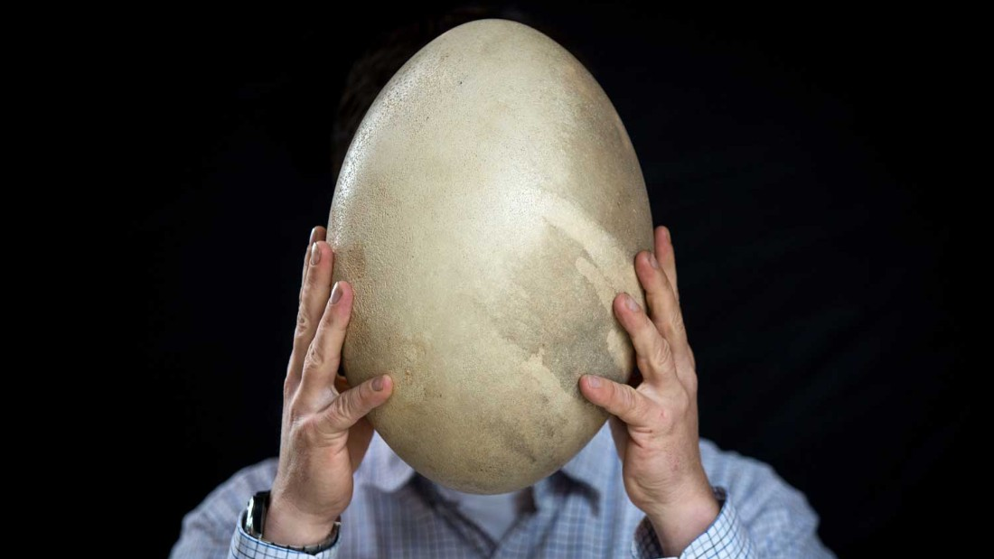 An elephant bird egg -- one of the biggest bird eggs in history -- will also be auctioned.