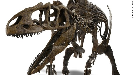 BILLINGSHURST, ENGLAND - NOVEMBER 19:  An Allosaurs nicknamed 'Young Al' estimated to sell for 300,000 - 500,000 GBP is displayed at Summers Place Auctions on November 19, 2015 in Billingshurst, England. This juvenile dinosaur's remains, which are extremely rarely found, are 150-155 million years old and were discovered in Wyoming, USA. Summers Place Auctions Third Evolution Sale of taxidermy, fossils and minerals will take place on November 25.  (Photo by Rob Stothard/Getty Images)