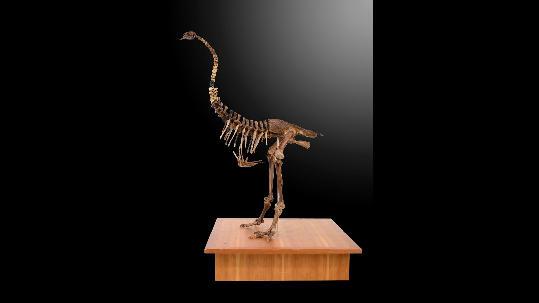 A skeleton of a Moa is also on sale. The now extinct flightless birds were native to New Zealand.