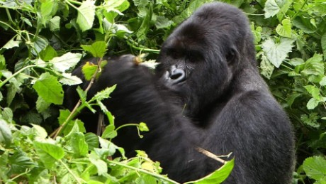 long 2 degrees congo conservation damon pkg_00001323.jpg