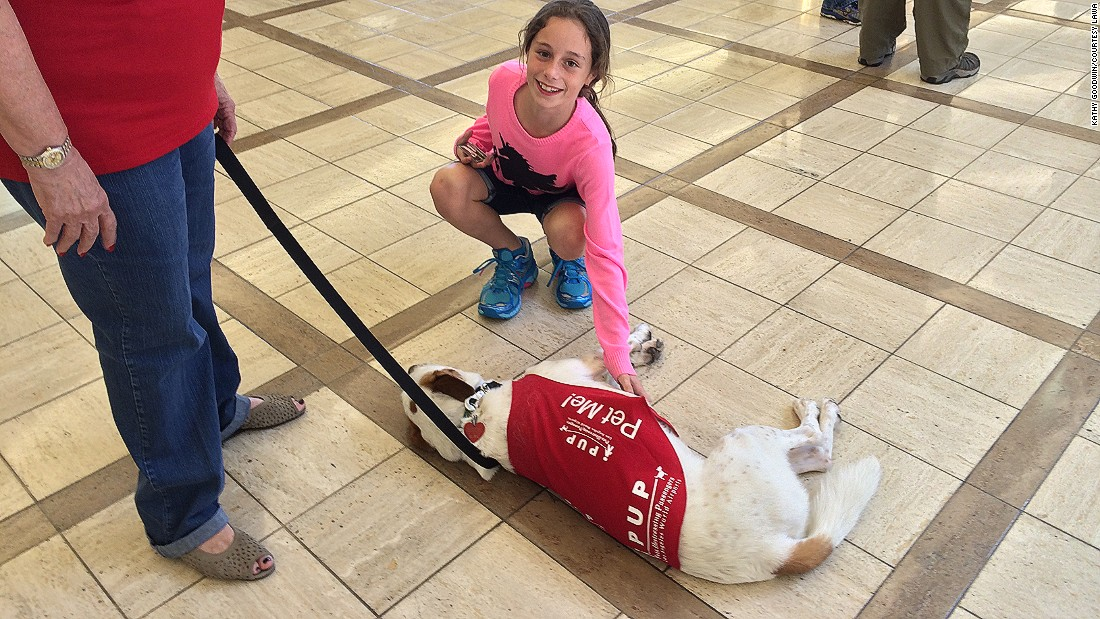 Therapy dogs from Los Angeles International Airport's PUP program (Pups Unstressing Passengers) give fliers something to smile about at the airport.