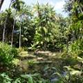 Singapore Botanic Gardens 2015(Afur-Wong)