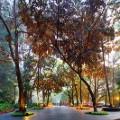 Singapore Botanic Gardens 2015(Darren-Soh)