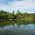 Singapore Botanic Gardens SwanLake(Darren-Soh)