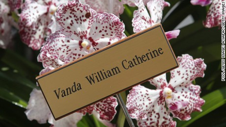 A VIP orchid named after the Duke and Duchess of Cambridge.