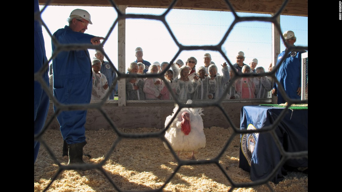 "Schoolchildren in Modesto, California, cheer for their favorite turkey Thursday, November 19, as one of the birds is chosen to receive a Thanksgiving ""pardon"" from President Obama."