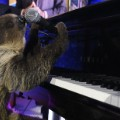 cnnheroes tribute sloth piano