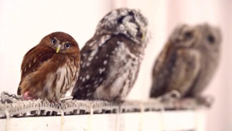 otr japan owl cafe_00000024