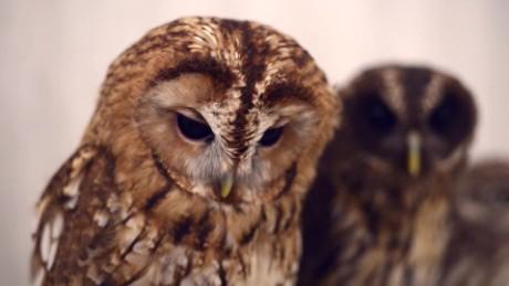 otr japan owl cafe_00000917.jpg