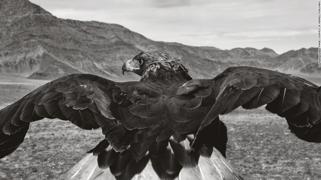 Palani Mohan is a photographer who has captured astounding images of the Altai Kazakh eagle hunters: a small community based in Mongolia who use eagles to find and hunt their prey.