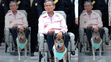 Man could face prison time for insulting King's dog