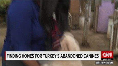 Finding homes for Turkey's abandoned canines_00003004