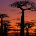 3. Emerging destinations Madagascar