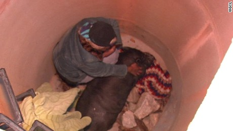 pig rescued from manhole atlanta_00001411