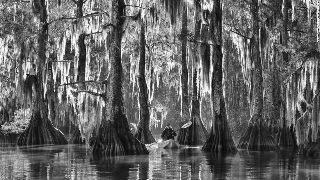 Another image by overall winner Marsel van Oosten shows giant cypress tress on a bayou in Lousiana's Atchafalaya Basin on a misty morning. The area is the largest wetland in the United States. (Photo: Marsel van Oosten/www.tpoty.com)