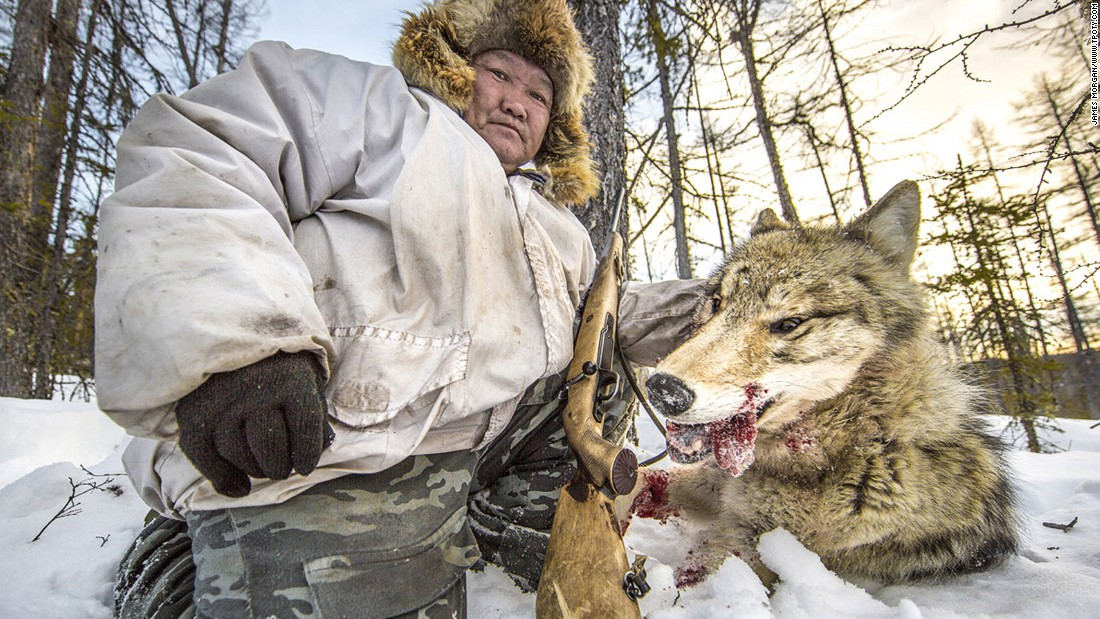 In the cold northerly wilderness of Yakutia in Russia, a wolf hunter poses with the head of his prey in this grizzly scene captured by Brit James Morgan. The image was a winner in the nature and environment catergory. (Photo: James Morgan/www.tpoty.com)