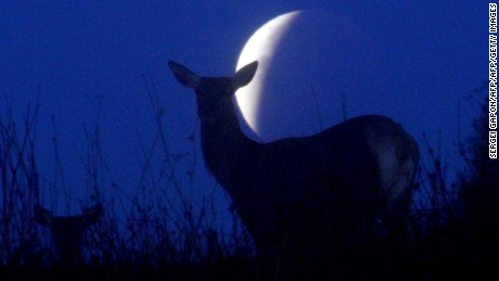 Reindeer are seen silhouetted against the moon during a lunar eclipse in Minsk, Belarus on September 28, 2015.